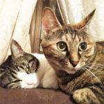 ミーちゃん(母猫)とチビ(娘)