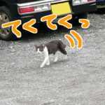 てくてく歩いて近づいてくる猫